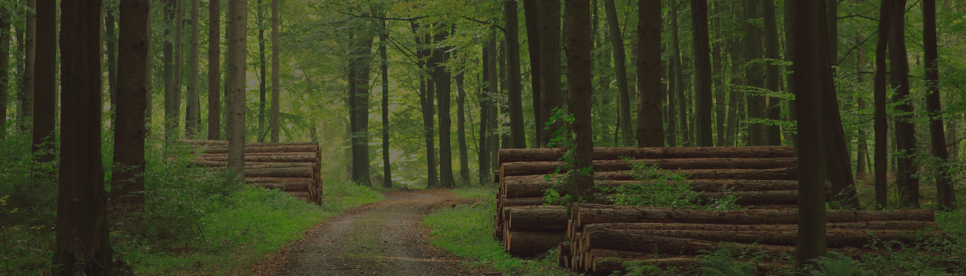 Forestry Homepage IT